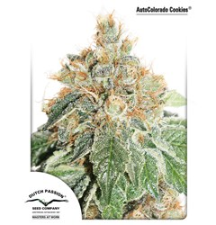 AutoColorado Cookies – Dutch Passion